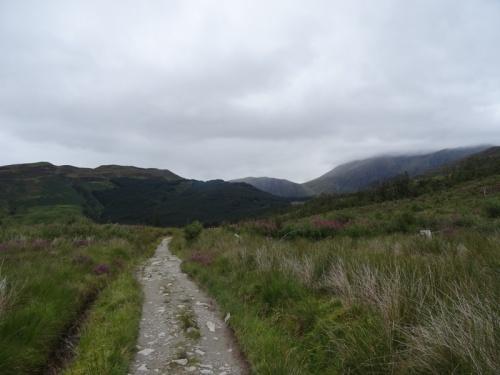 Walking through cleared pine plantation. Ben Nevis dominating the skyline (half hidden behind clouds).