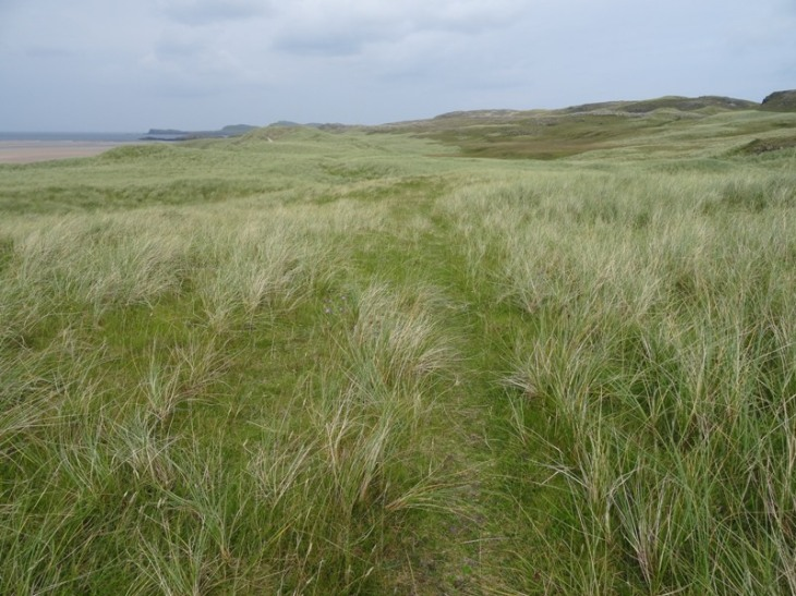 Some of the less thick grass to walk through.