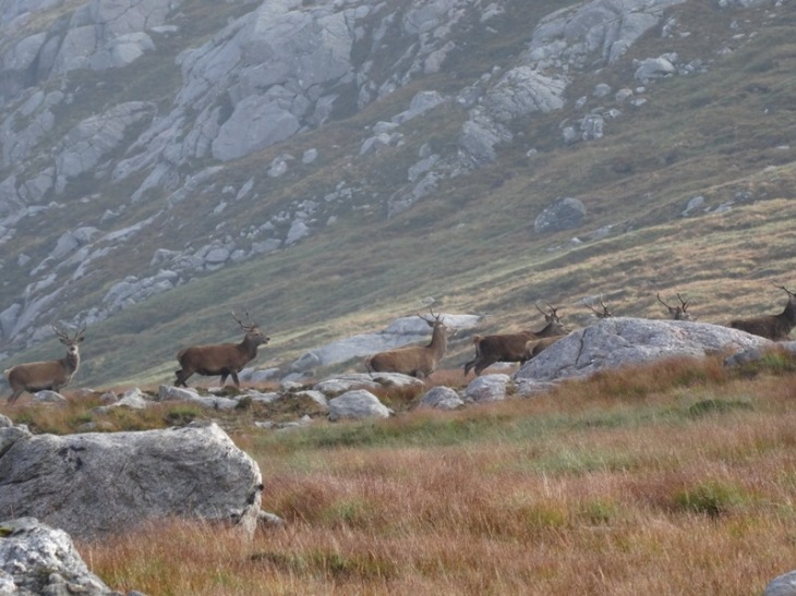 Deer on the north west slopes of Foinaven