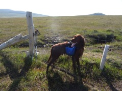 I lifted him over this fence. See all that mud on him? Guess where a lot of it ended up.