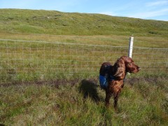 Another fence I had to lift him over. (We have recently been learning to jump fences to save us both from this ordeal)